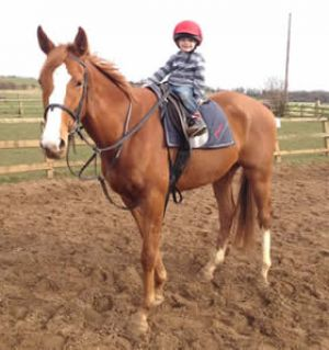 Billy - unraced homebred