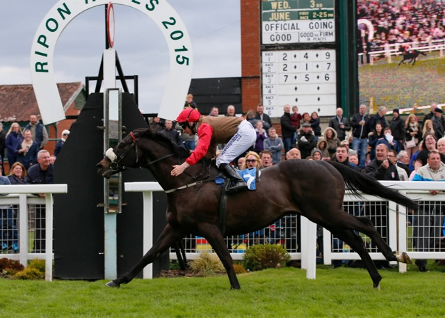 WINNER! Dubai Dynamo wins at Ripon - 17th May 2015