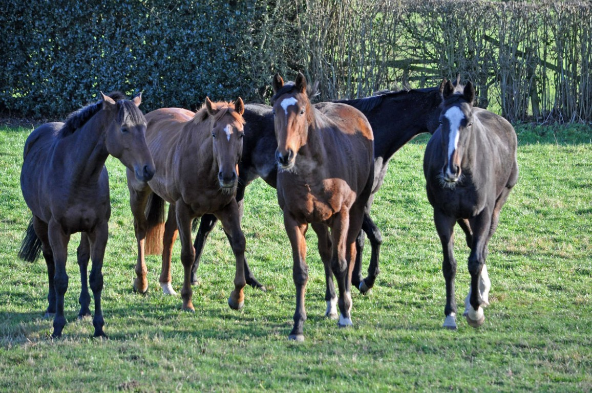 Left to right; Ben Hall, Danish Duke, Be Perfect and Almuhalab