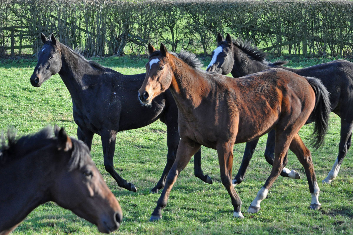 Left to right: Ben Hall, Cosmic Chatter, Be Perfect and Almuhalab