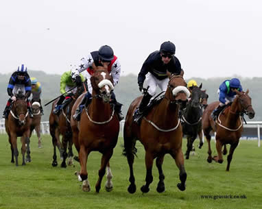 WINNER! King Torus makes it three - 17th July 2014