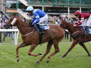 TWO WINNERS! A double at Newcastle - 5th August 2015