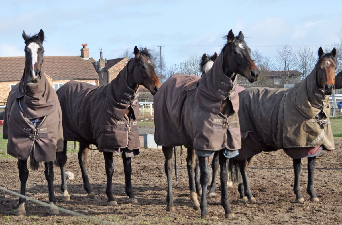 Horses happy in turnout - February 27th 2015