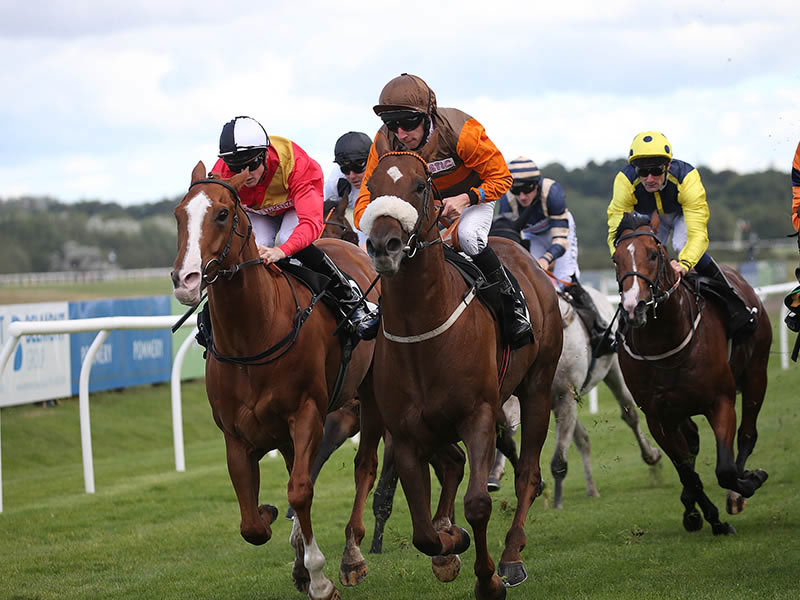WINNER! Lexy at Musselburgh - 26th August 2015