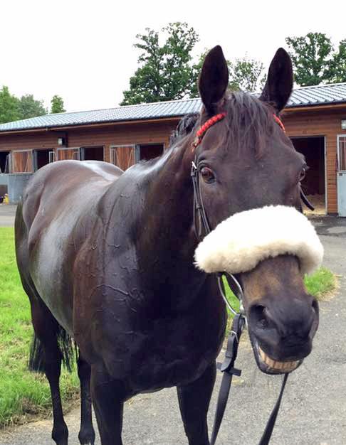 dubai in stables hamilton