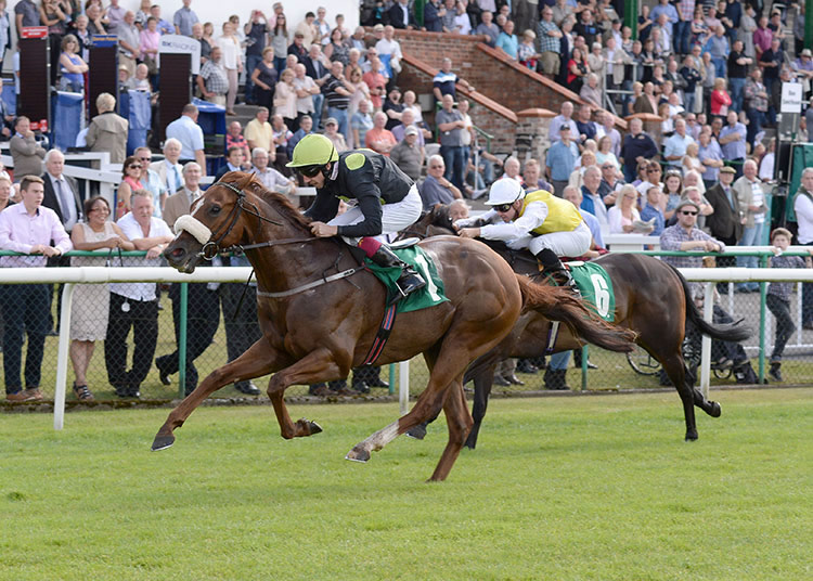 WINNER! Magical Effect wins Thirsk maiden - 29th July 2016