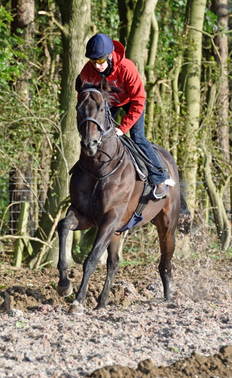 Jimmy on Gallop