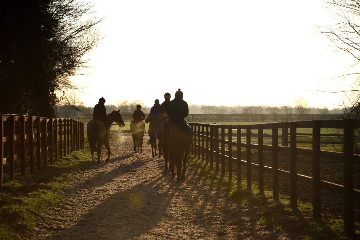 Saturday Morning Gallops and Turn Out - February 2017