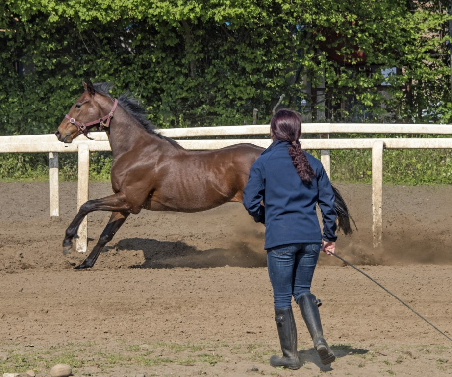 Emily in charge of the lunging