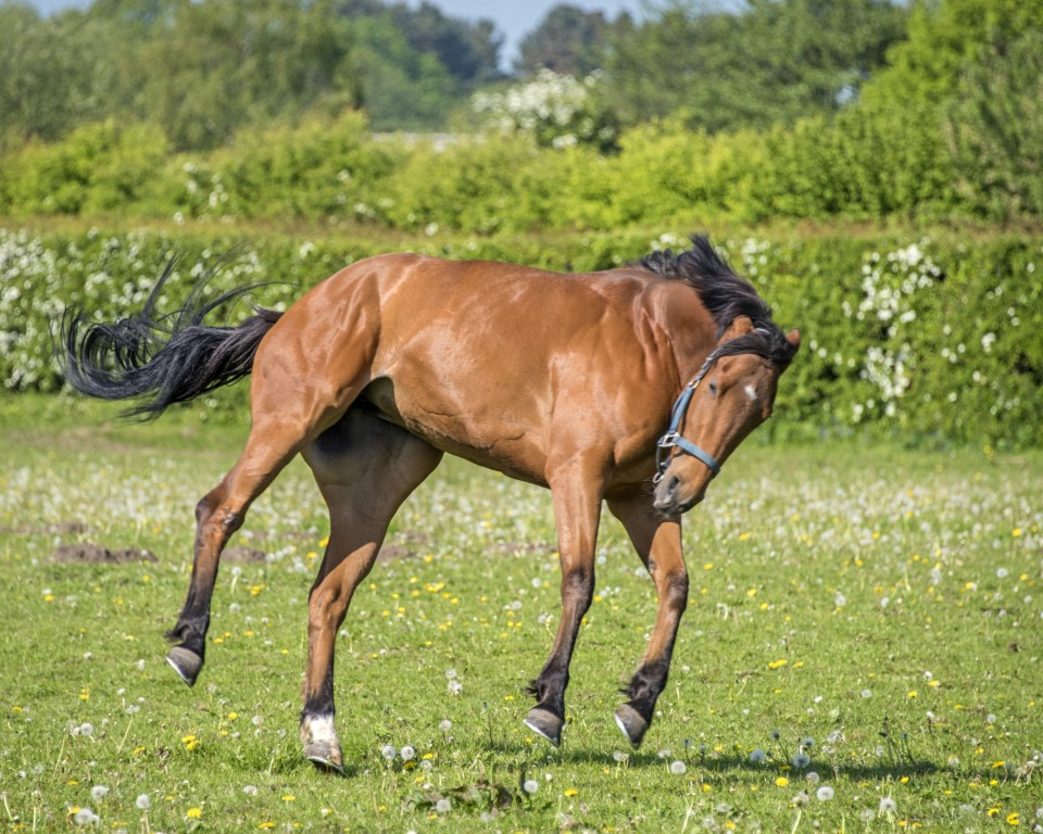 Open Morning for the British Racing Club - 19th May 2018