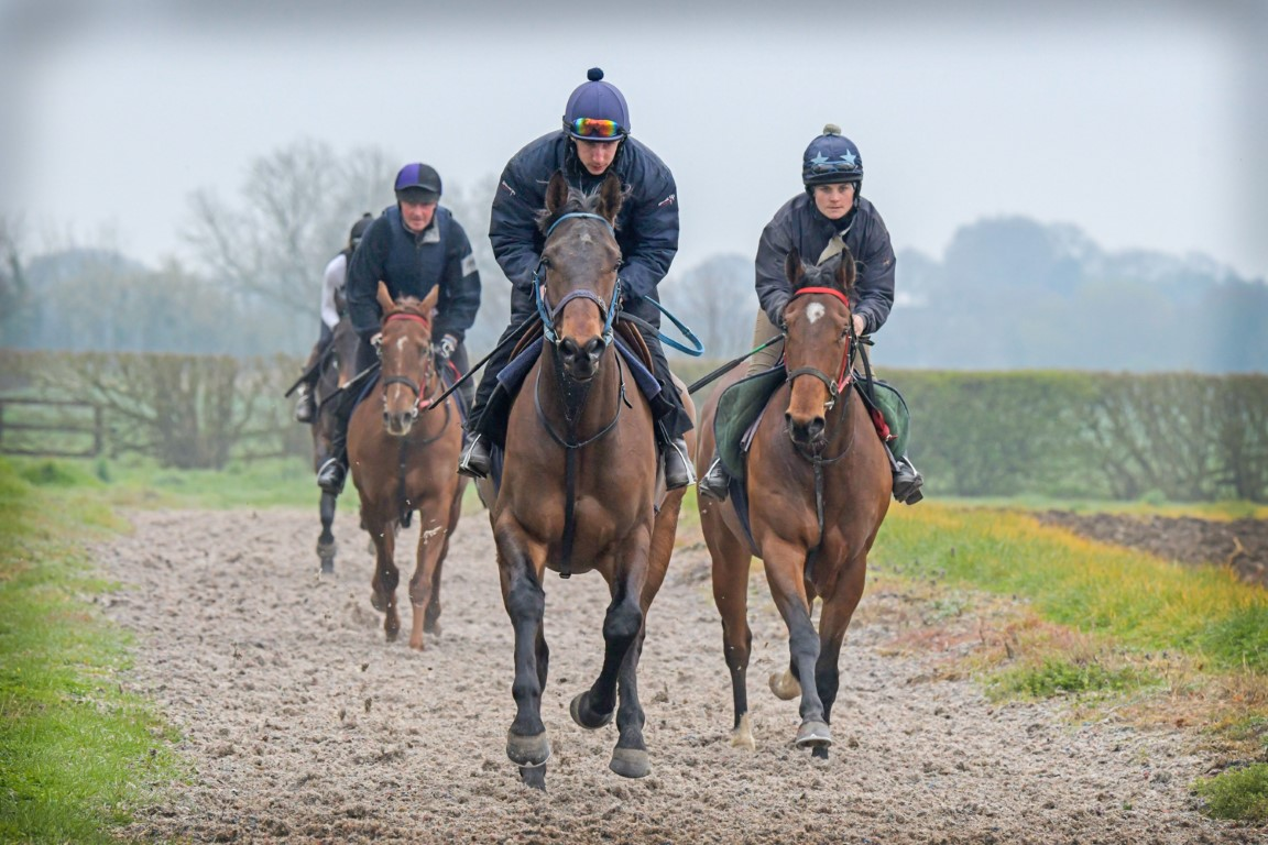 Monday Morning on the Gallops - 8th April 2019