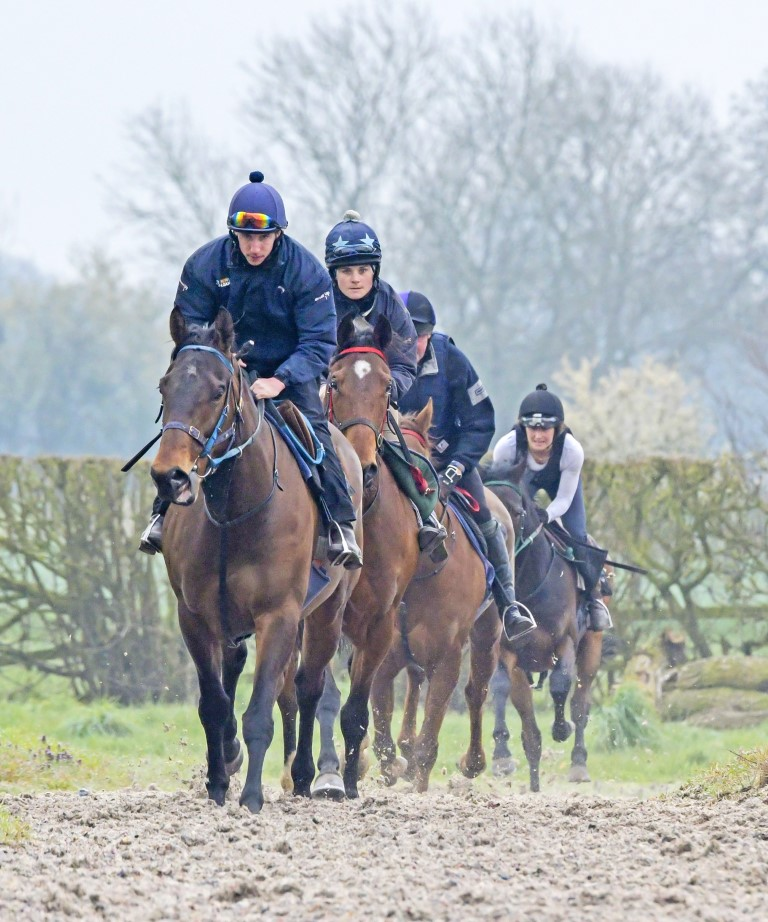 All Weather gallops