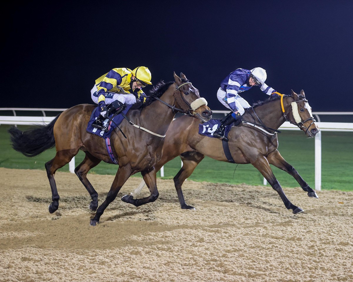 WINNER! Khazaf at Newcastle - 6th November 2020